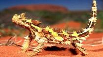 Dünyanın en ilginç 10 canlısı